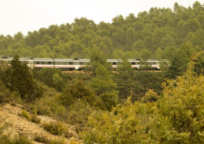 Tren entre pinares