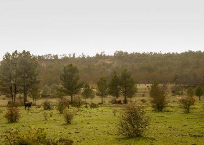 """Ramal de la Cañada Real de Andalucía, también llamado de Los Chorros debido al gran número de """"coladas""""( vías pecuarias de anchura variable) que, como cascadas, se van sucediendo para ubicar los ganados en los montes elegidos para el pastoreo."""