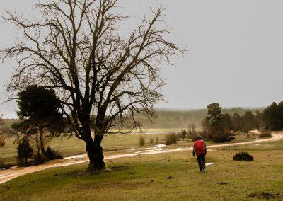 Por este paraje, realmente precioso, discurre el sendero de la Cañada Real de los Chorros. PR-CU 87.